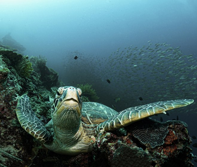 Turtle, photographer Patrik Jonson